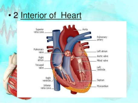 the-heart-science-7th-class-powerpoint-presentation-9-638