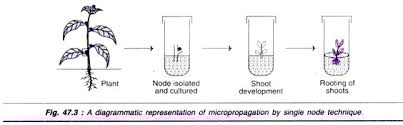 micropropagation.jpg