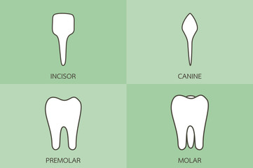 incisor.jpg